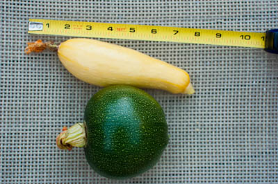 Earthbox Squash
