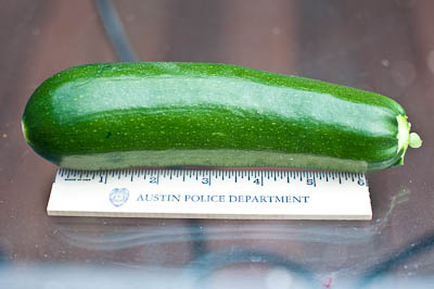 Earthbox Black Beauty Zucchini