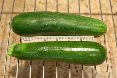 Earthbox Cucumber and Sqauash